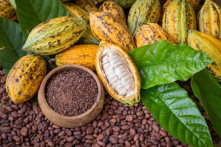 A pile of cacao pods lying next to a bowl of cocoa nibs