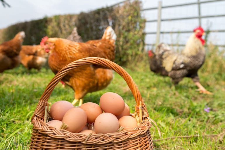 Chickens happily running in green grass. A basket of brown eggs sits in the foreground.