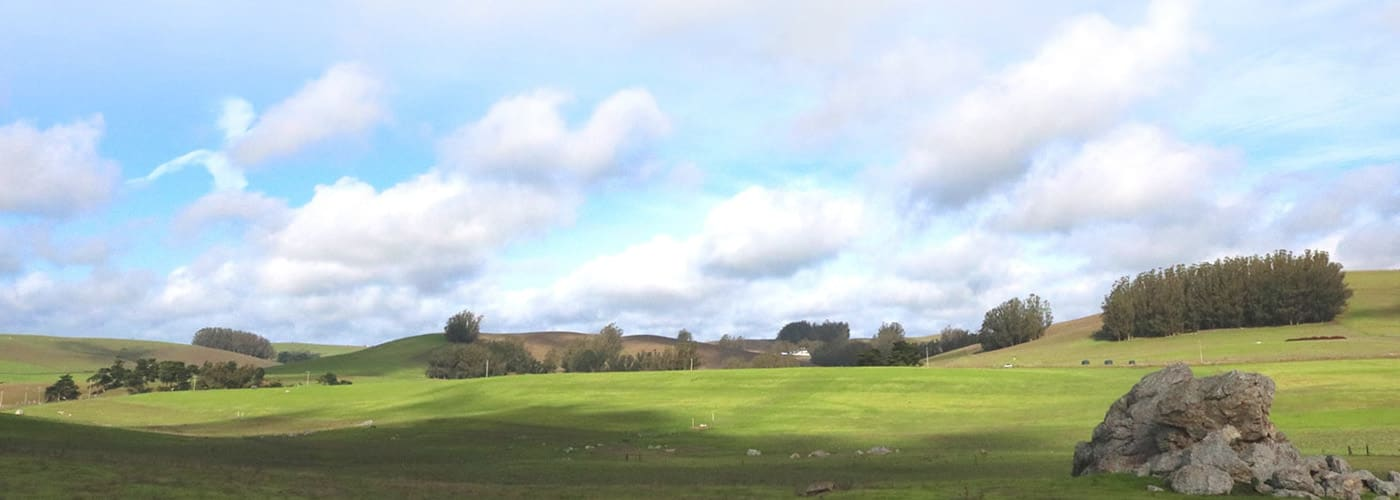 A landscape view of a green pasture. White, puffy clouds are scattered across a blue sky.