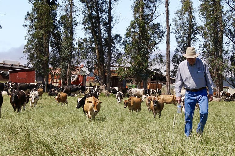 A farmer walking next to some cows