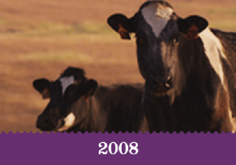 Year 2008 - Two cows in a field