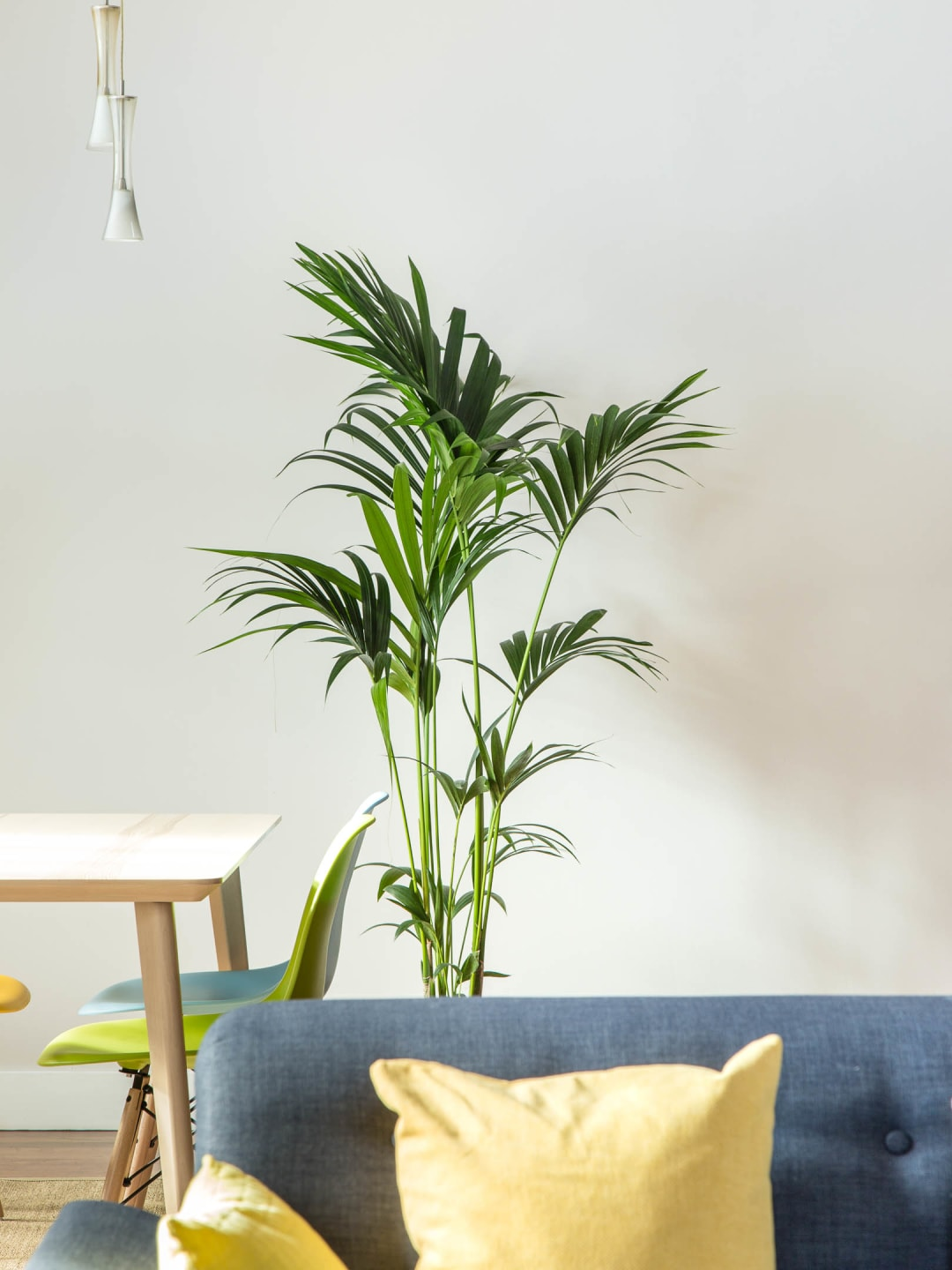 a minimal modern appartment in Leeds with green plant property photography for Bricklane.com