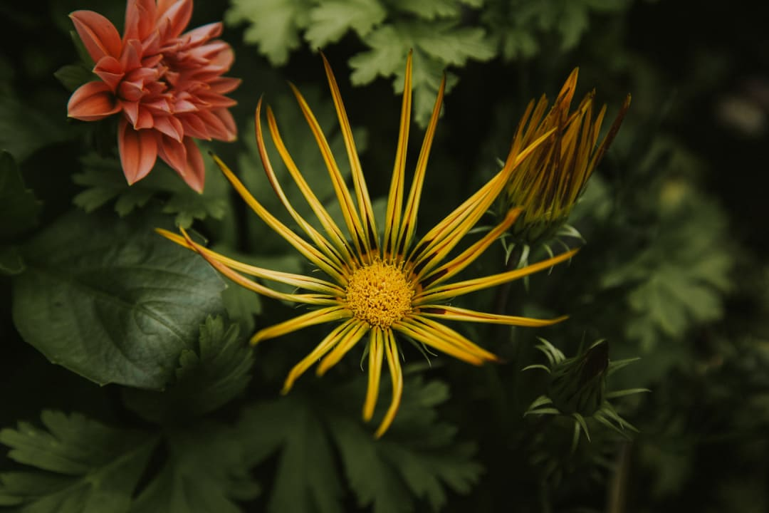 A yellow wirey petal flower.