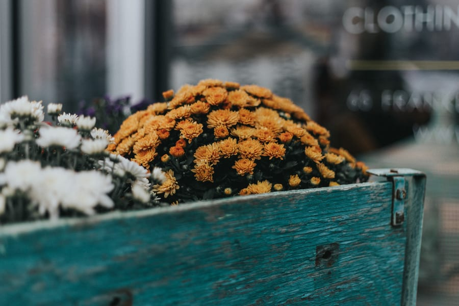Yellow flowers in a little wagon outside of a flower shop in Brooklyn