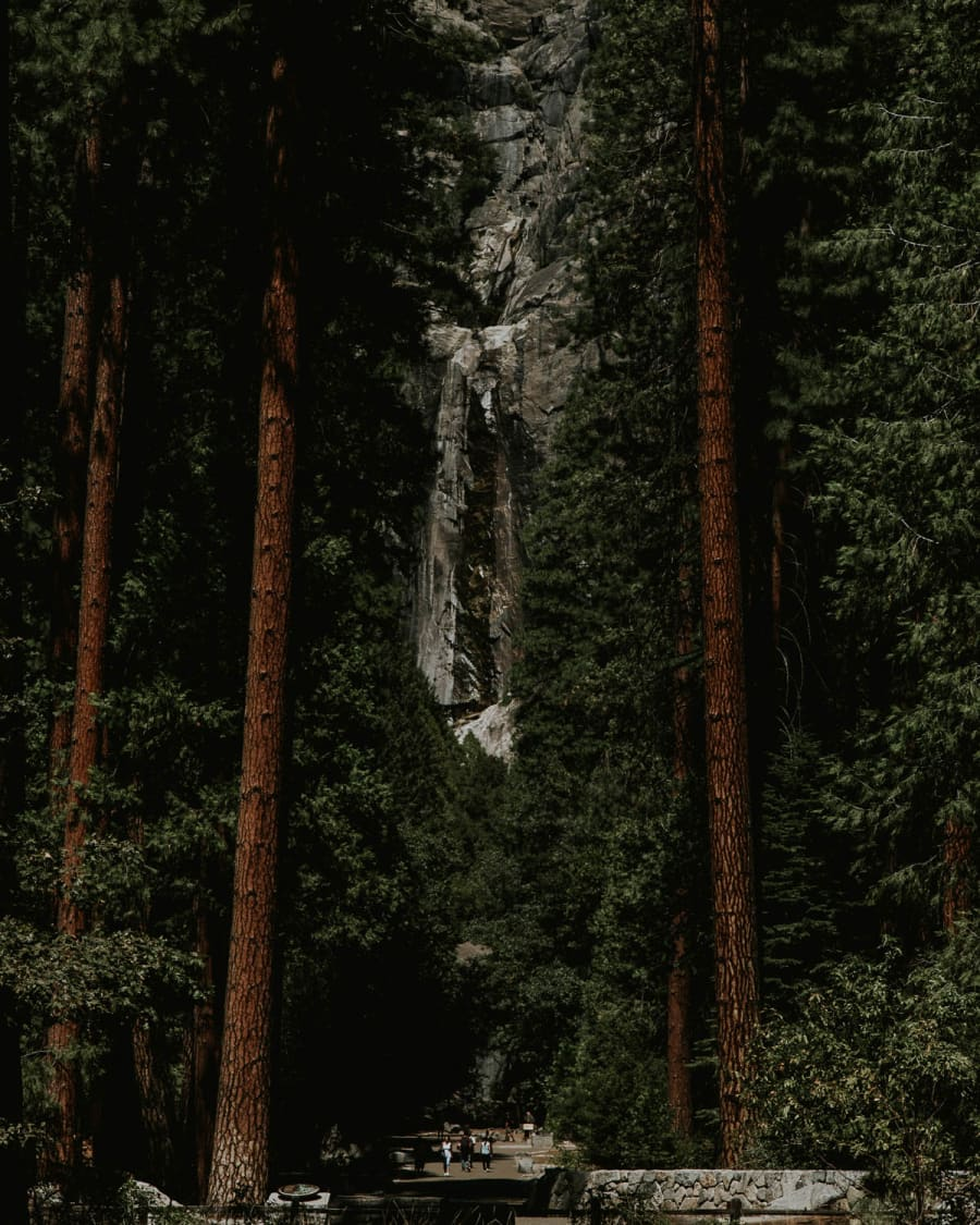 A dry Yosemite Falls between two large trees from the valley floor