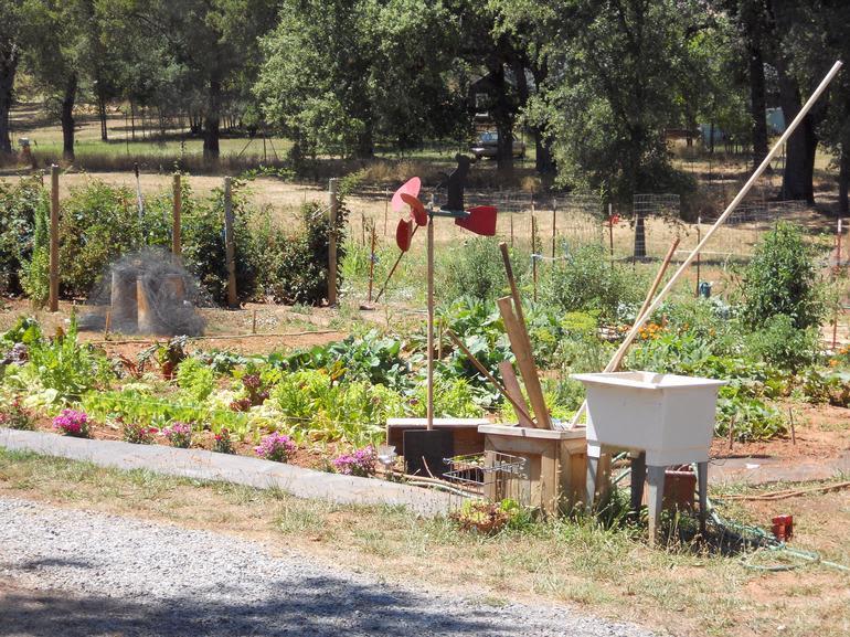 Berry Heaven, USA - Fresh Garden Veggies