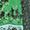 Tunikakleid mit Bandana-Print