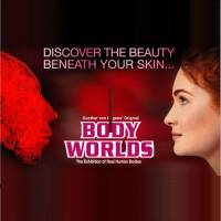 BODY WORLDS - Exhibition of real human bodies