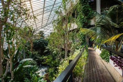 Explore nature among the brutalist architecture in the Conservatory