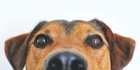 Banner Aller promener le chien en vous engageant à respecter les recommandations sanitaires et les distanciations sociales.