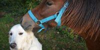 Banner Gratis uitlaatservice voor honden en verzorging van paarden voor dieren van zorgpersoneel
