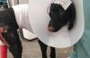 Her pain is managed through a pain patch that is placed on her head.