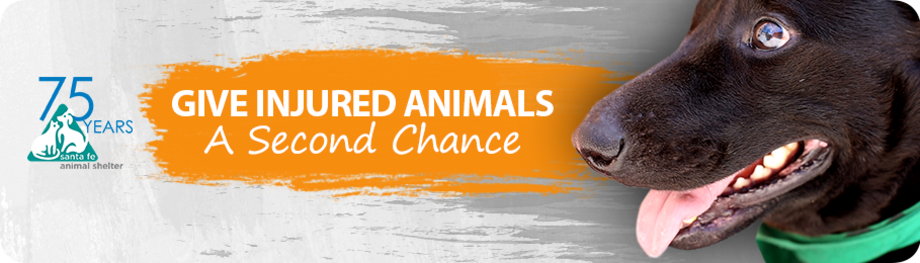 Give injured animals a second chance