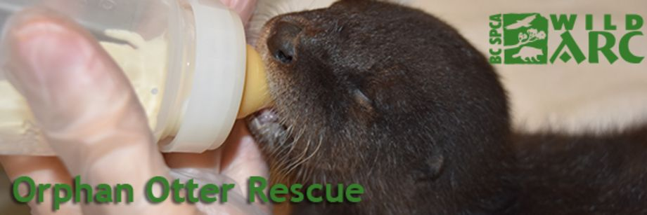 Rescue Orphan Otters