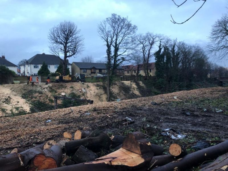 Hero for Anger over tree felling in Walthamstow