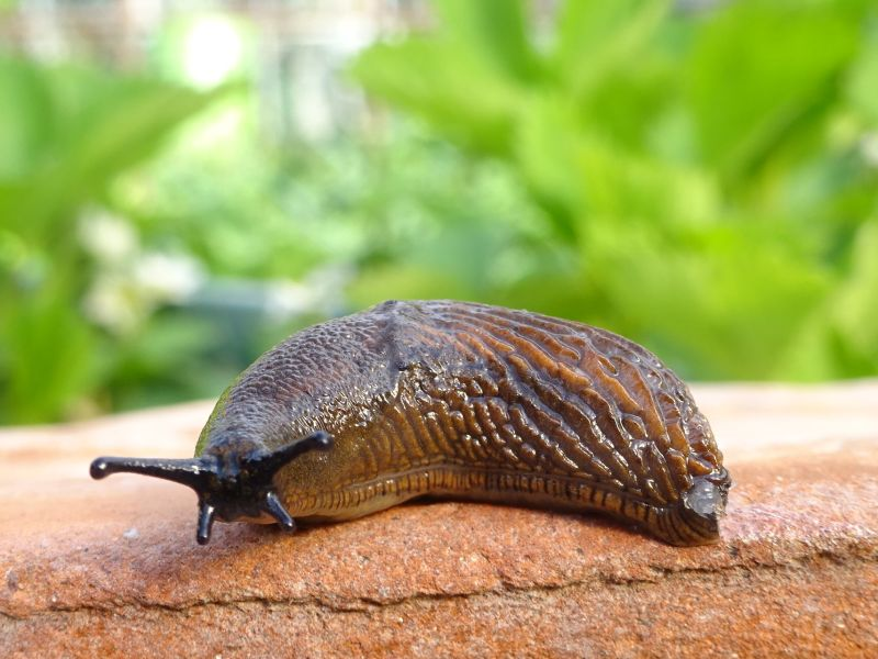 Hero for Prepare your defences – slugs and snails are coming to a garden near you