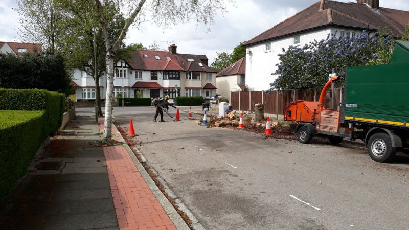 Hero for Shock as 'cherished' trees felled in Finchley