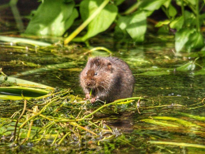 Hero for Meet the wildlife wonders of Waltham Forest