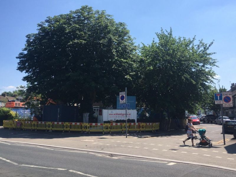 Hero for Why we want to save Gaywood Road's trees