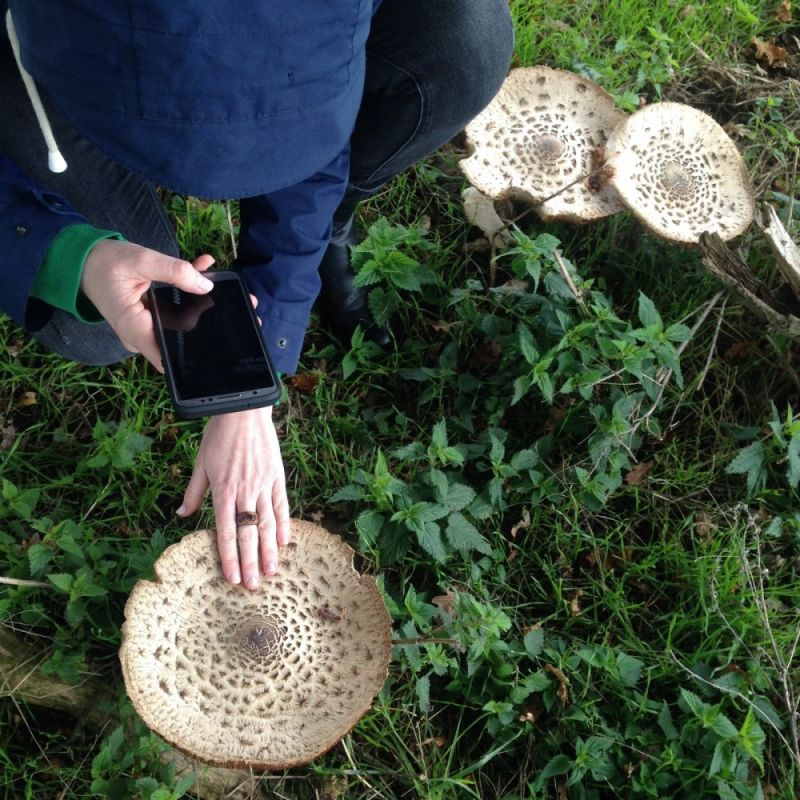 Hero for 'Fungus Fortnight' ready to bloom in Chingford