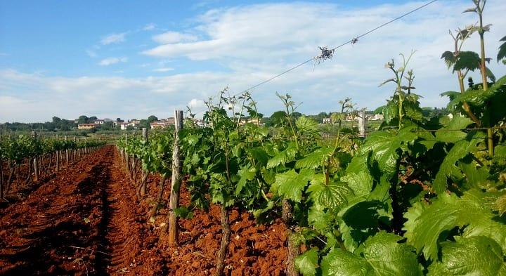 Magičana i plodna zemlja unutrašnjosti Istre (Foto: Ivana Perkovac/Glas Hrvatske)