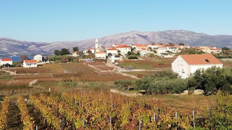 Vineyards in Lumbarda field (Photo: Tanja Rau)