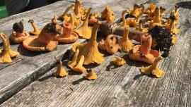 Kristinkina kušaonica: U potrazi za šumskim obrokom