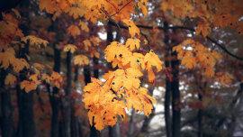 Hrvatski jazz: Žute boje jeseni