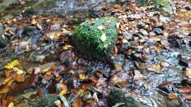 Hrvatski stil: Park prirode Papuk