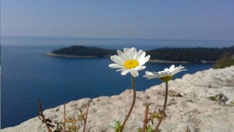Ausblick vom Park Orsula auf die Insel Lokrum