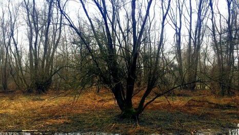 El delta del río Mura a la espera de la primavera