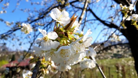 Frühling in Kozjača