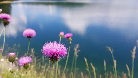 Ljeto na planinskom jezeru