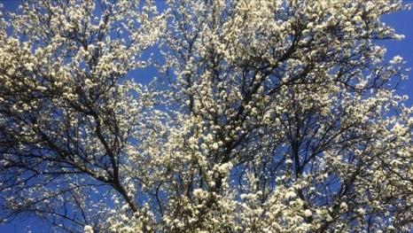 Proljeće stiže danas...