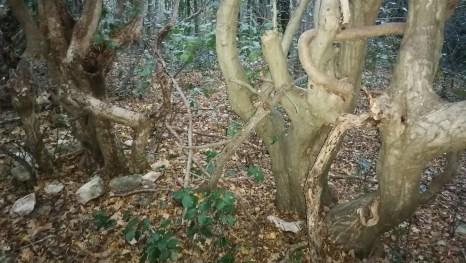 Čudesna šuma (Foto: Cenka Španović Huzjak)