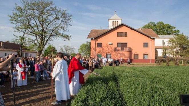 Blagoslov žita i Dužijanca (Autor:Josip Stantić)