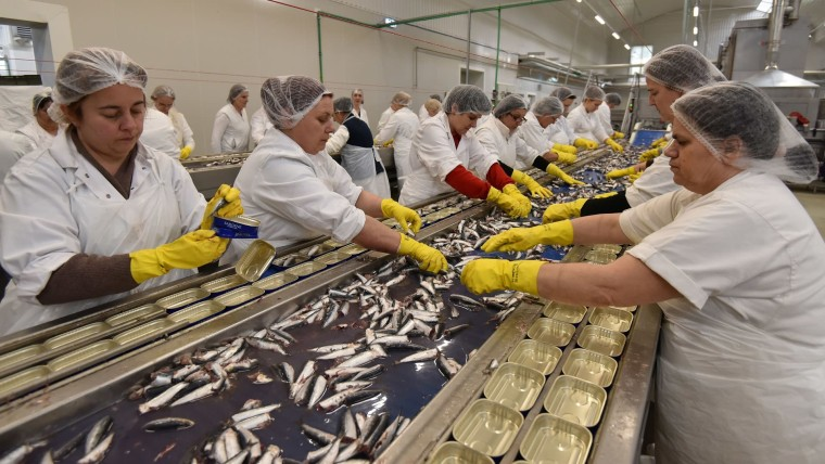 Mirna fish cannery in Rovinj (Photo: Dusko Marusic/PIXSELL)