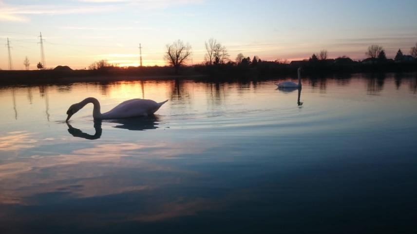 El atardecer abraza el lago de Velika Gorica