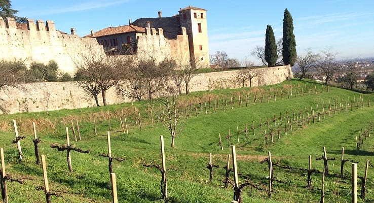 Prosecco_vineyards