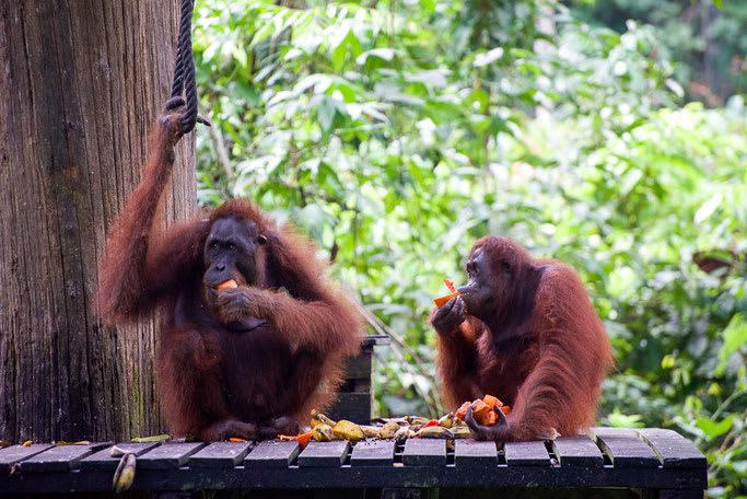 Malaysian Borneo featured image