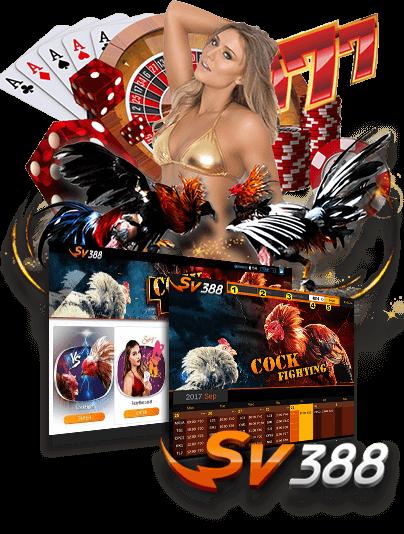 Judi Adu Ayam Online dan Sexy Baccarat SV388