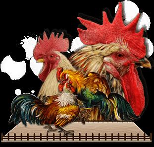 Promo Sabung Ayam