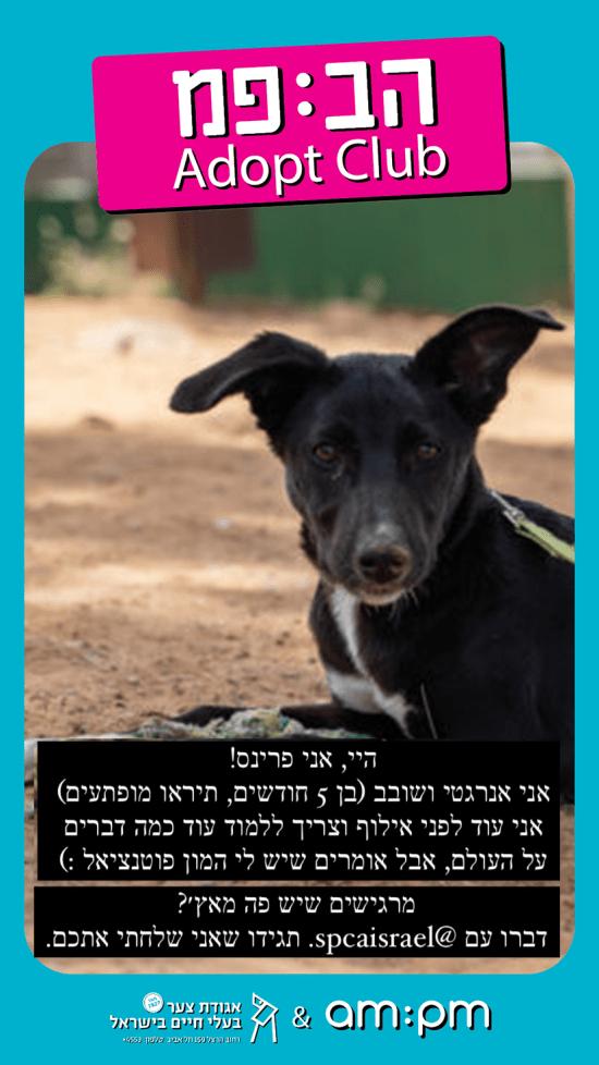 רשת am:pm ואגודת צער בעלי חיים ביוזמה משותפת / צילום: יח''צ