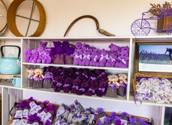 """חנות במושב בגולן. """"לתת לאנשים אופציות חוקיות להתפרנס"""" / צילום: Shutterstock"""