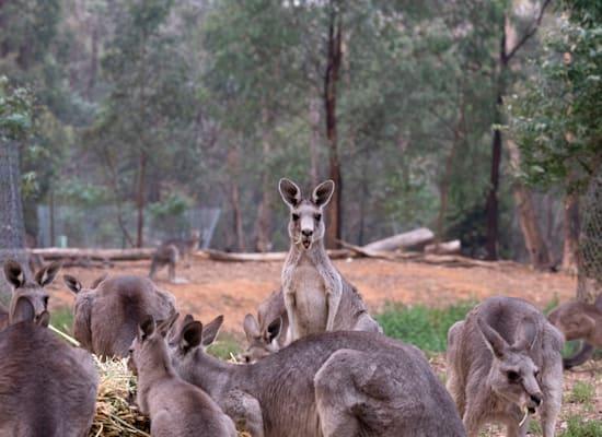 מחסה לקנגורו באוסטרליה / צילום: Alana Holmberg / Greenpeace