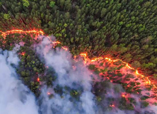 שריפות ביערות סיביר / צילום: Julia Petrenko / Greenpeace
