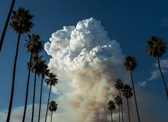 שריפות בקליפורניה / צילום: David McNew / Greenpeace