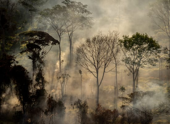 שריפות ביערות הגשם בברזיל / צילום: Christian Braga / Greenpeace
