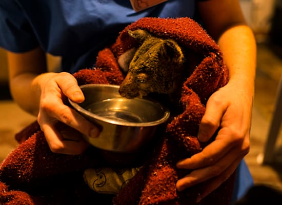 מחסה לחיות בר באוסטרליה / צילום: Andrew Quilty / Greenpeace