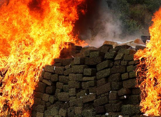ערימות של מריחואנה, שהוכנו להברחה על ידי קרטלי הסמים במקסיקו, והועלו באש / צילום: Reuters, JORGE DUENES
